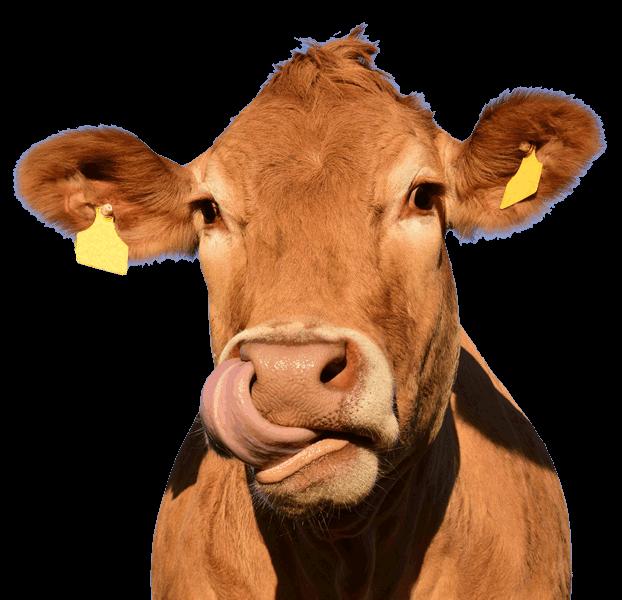 West Midlands Wholesale Meat Suppliers - D&R Meats